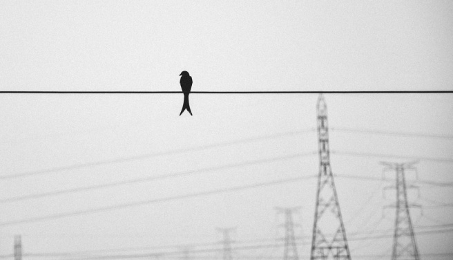 vogel alleen