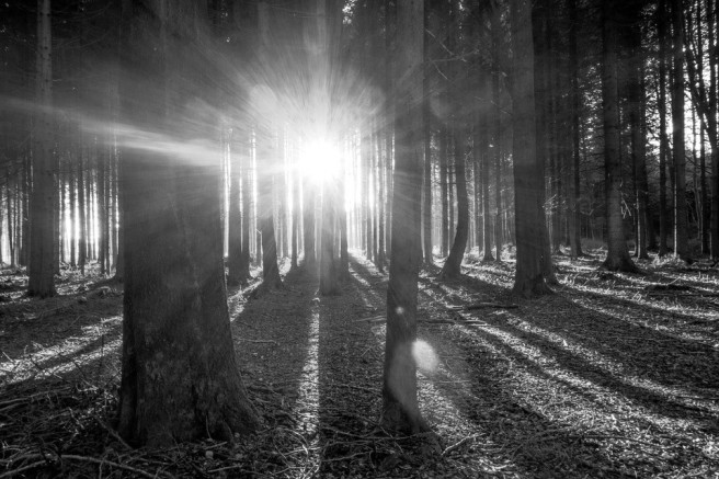 forest-638122_960_720