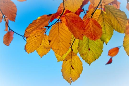 leaves-3821723_1280